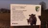 Nad Krkonoškou ulicí se pase dobytek firmy Farmers s.r.o