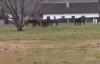 koně na začátku Starých Buků
