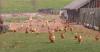 farma paní Ufniarzové